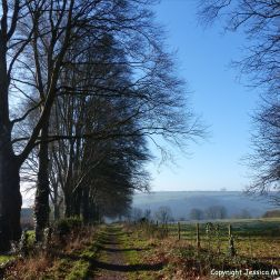 The path beside the beech trees on a frosty January morning