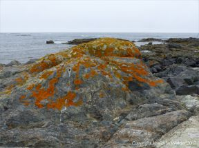 Outcrop of volcanic rock with orange lichen at Fourchu Head