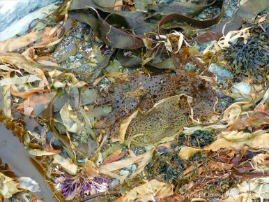 Seaweed washed ashore at Fourchu Head