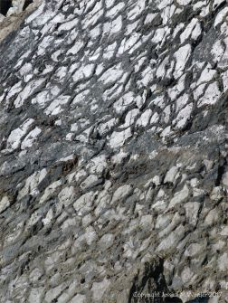 Close-up of rock face with roughly polygonal pattern of preserved mud cracks