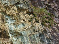Rock face with quartz veins at Dunquin Harbour