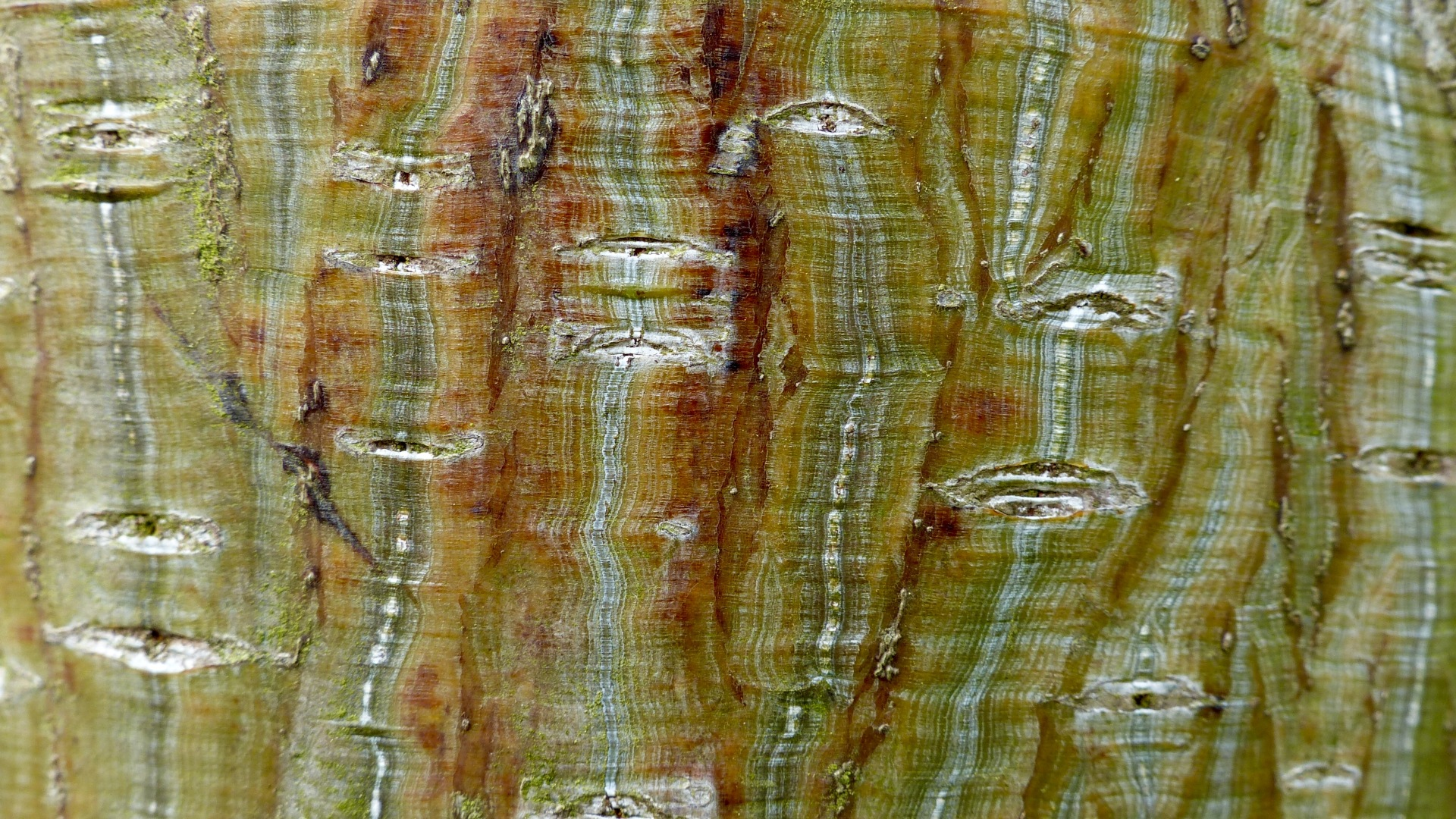 Natural tree bark pattern