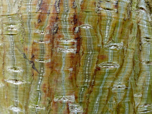 Natural tree bark pattern