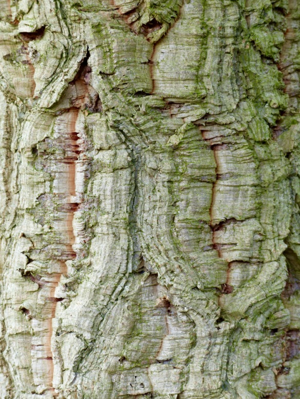 Cork Oak bark pattern