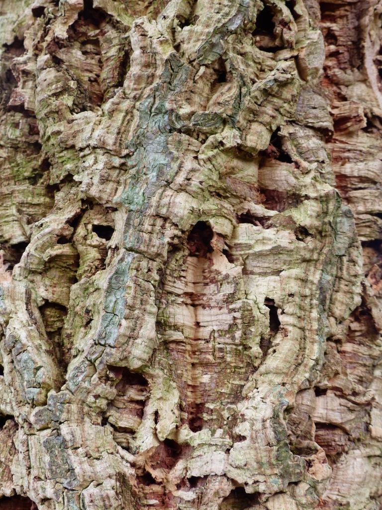 Cork Oak bark texture