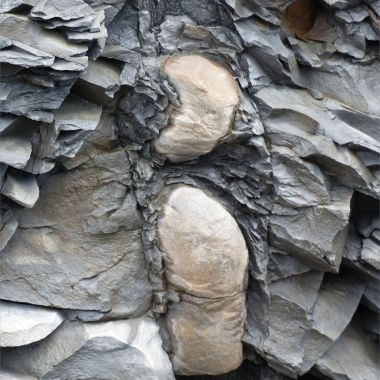 Calamites fossil replaced by siderite in Carboniferous strata
