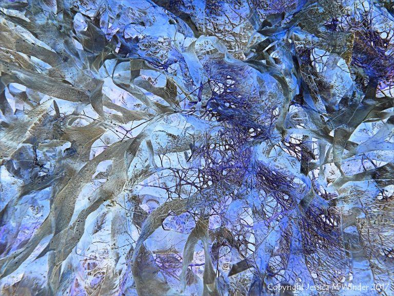 Tangled seaweed
