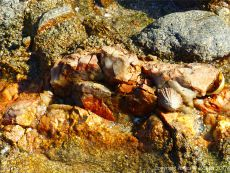 Vein of contrasting colour in granite at Rousse Point