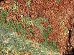 Colourful rock at Rousse Point