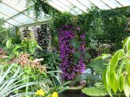 Orchids in the Princess of Wales Conservatory at Kew Gardens