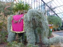 Elephant in the Princess of Wales Conservatory at Kew Gardens