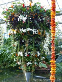 Flowers in the Princess of Wales Conservatory at Kew Gardens