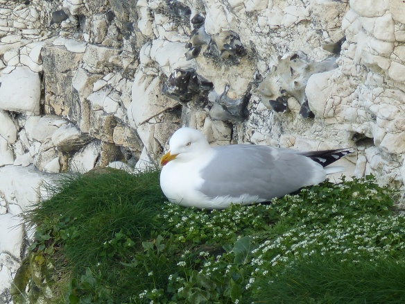 Seabird sitting on a cliff ledge