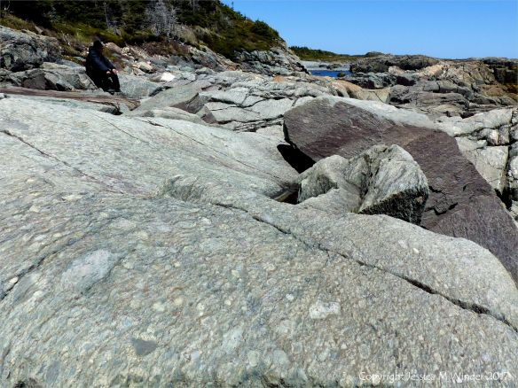 The shoreline with rocks of pyroclastic breccia north of Louisbourg Lighthose in Cape Breton in Nova Scotia