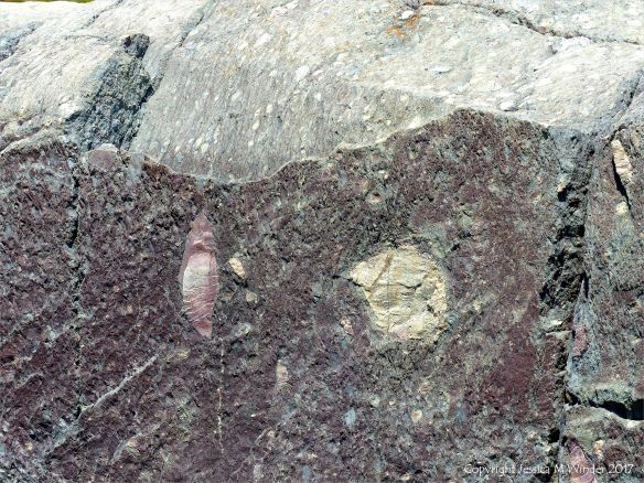 Angular rock fragments embedded in a volcanic ash matrix from a pyroclastic flow in Cape Breton Island