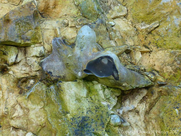 Flint nodule embedded in chalk