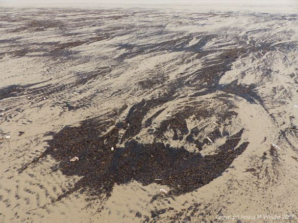 Driftline patterns of black particles on a sandy beach
