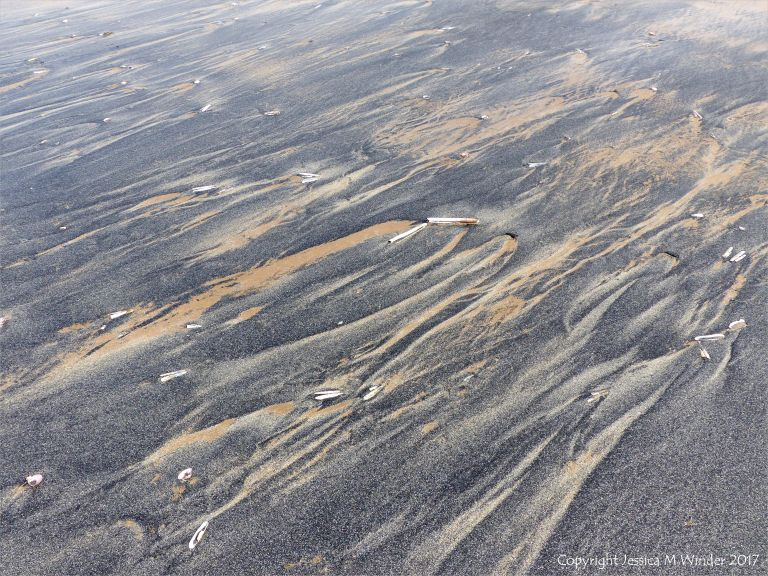 Natural patterns in black detritus on the strandline at Rhossili beach