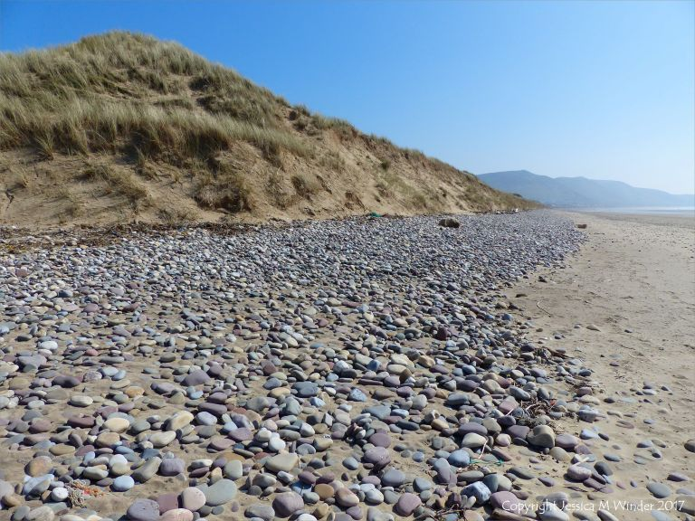 Pebbles and dunes at the top of Rhossili Beach at the Llangennith end