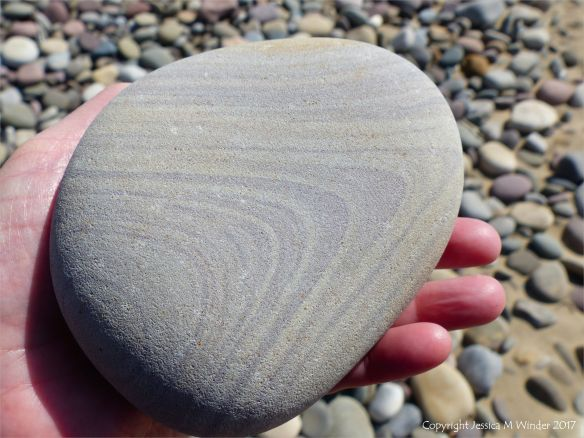 Pebble with a subtle pattern of stratification at Rhossil Beach in Gower