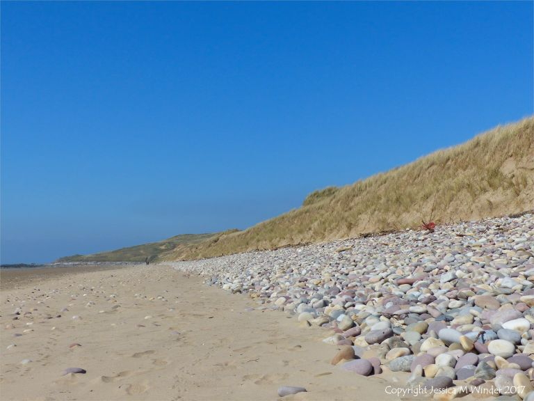 View looking north at Rhossili beach showing pebble bank at the foot of the dunes belonging to Llangennith Burrows