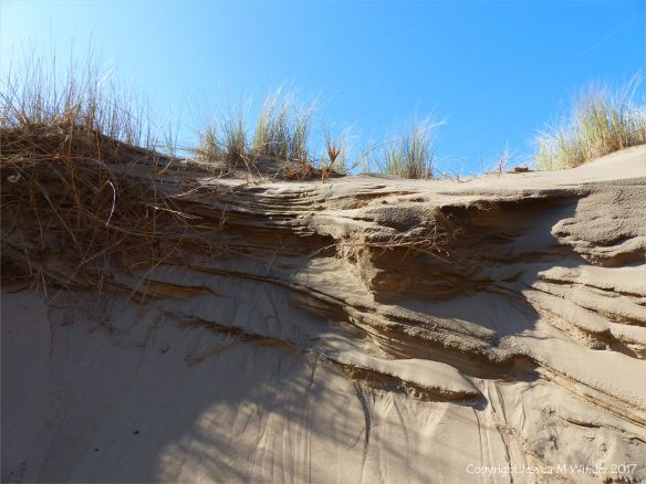 Cross-section through a sand dune showing stratification