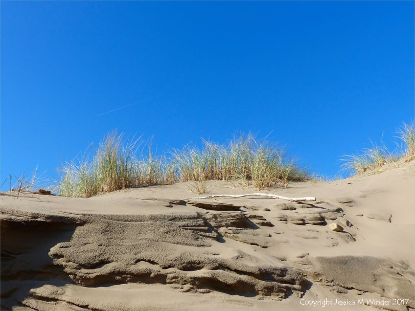 Eroded sand dune at Rhossili Beach with marram grass on top of layered cut
