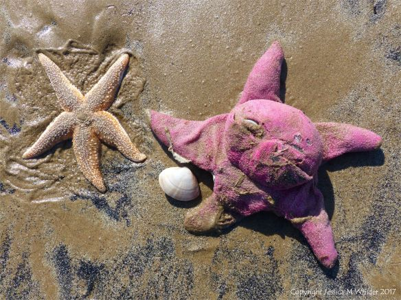 Toy starfish with real starfish on the beach
