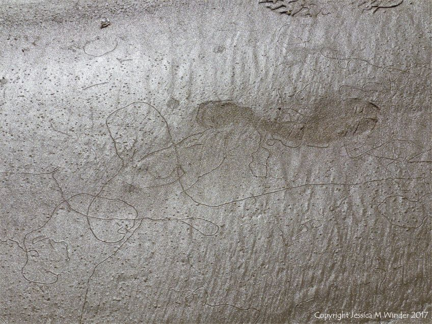 Tracks and trails left by minute seashore creatures on the surface of damp seashore sand