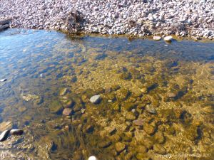 Possible periphyton on submerged rocks in a stream