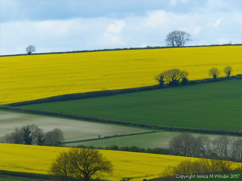 Green and yellow springtime fields in the Dorset landscape, England.