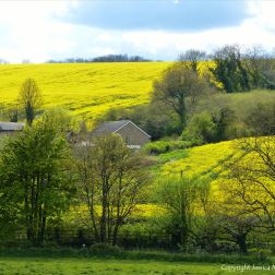 Rural springtime view in the Dorset landscape