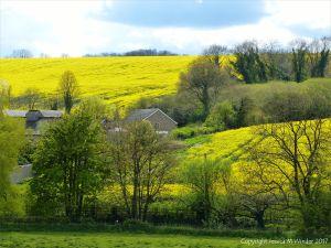 Rural springtime view in the Dorset landscape