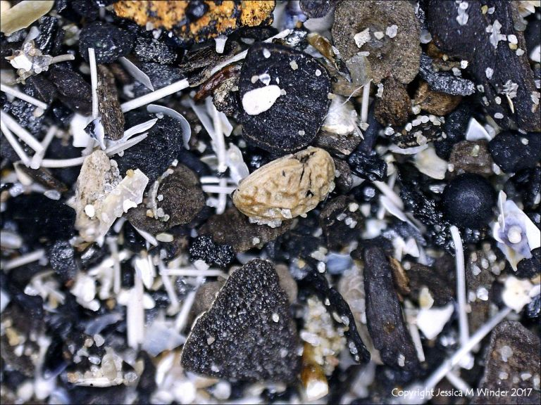 Composition of black beach sediments viewed under the microscope
