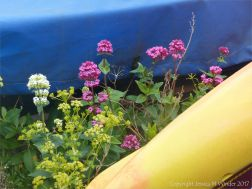 Pink and white wild flowers growing on the beach between overwintering boats