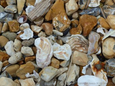 Empty oyster shells on flints and pebbles at the beach