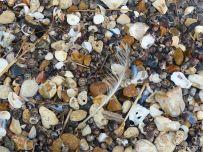 Seashells and shingle on the beach