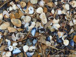 Seashells, flints, and pebbles on the seashore