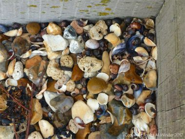 Seashells, flints, and pebbles against a wooden breakwater on the shore