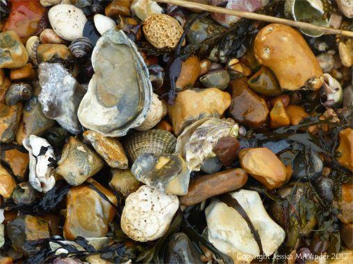Seashells on a shingle strandline