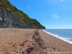 Looking east on Seatown beach at the dark strandline of dried seaweed