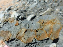 Strange rusty marks in a fallen piece Eype Clay Menber at Seaton, Dorset