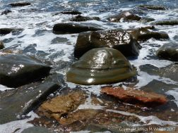 Boulders on a pebble beach washed by waves
