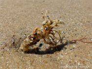 Sand tube of marine worm on a beach
