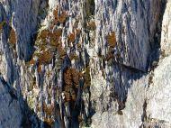 Fine layers of ash in volcanic tuff from Cape Breton in Nova Scotia