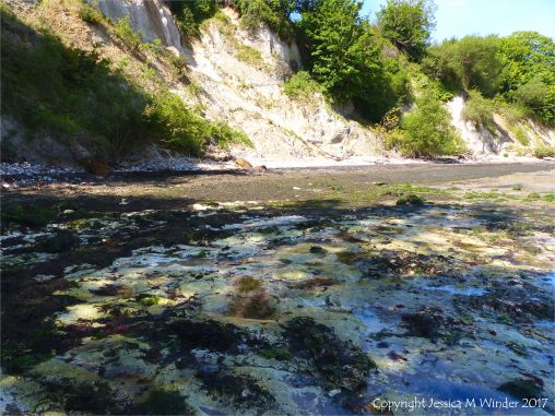 View of the flat chalk surface on the shore at South Beach in Studland Bay with colonies of burrow dwelling marine worms