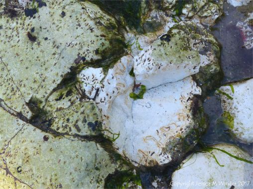 Small holes and burrows made by marine worms in chalk bedrock at South Beach in Studland Bay
