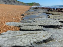 Patterns in eroding layers of calcareous mudstone at Seatown in Dorset