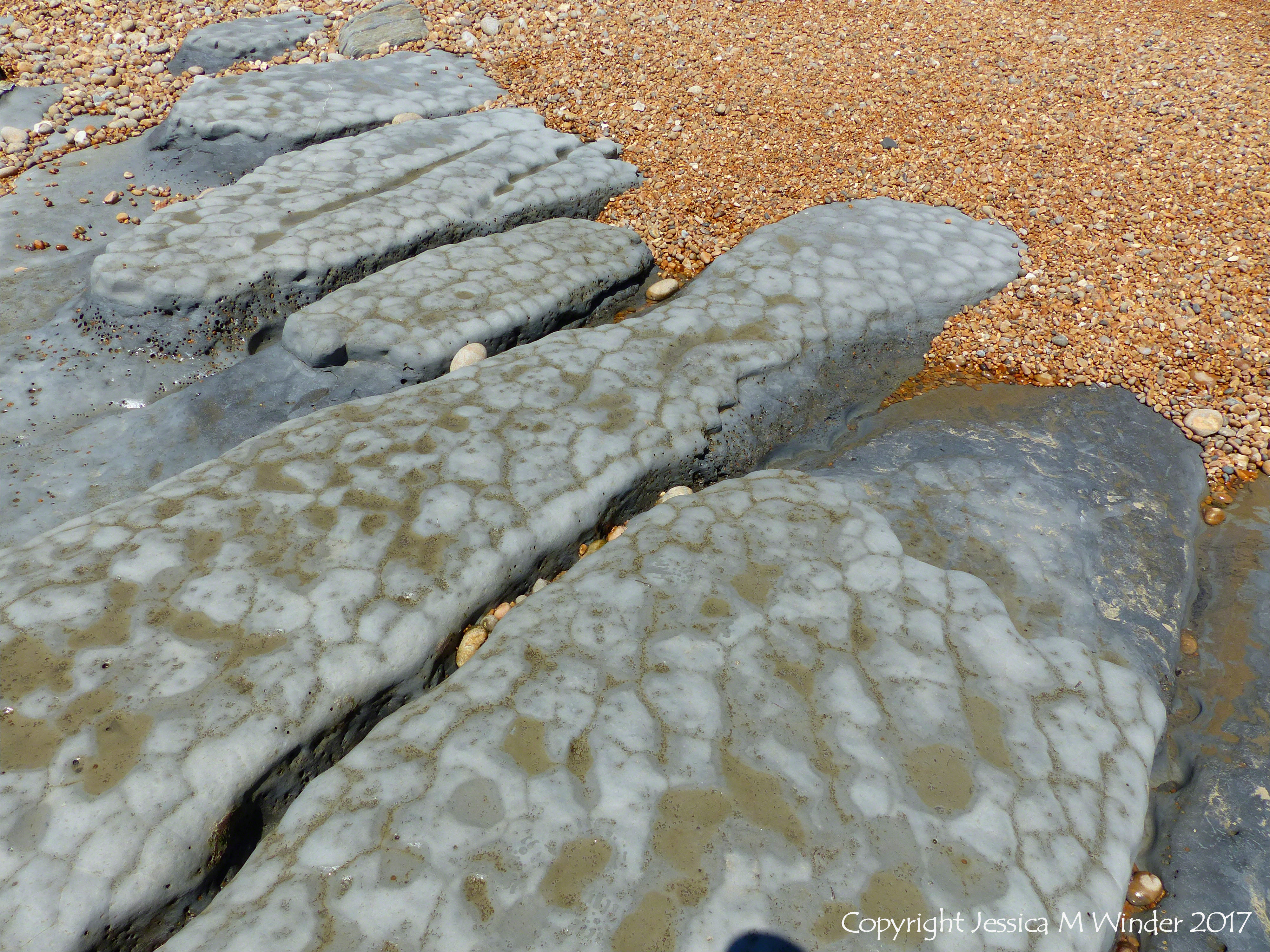 Seatown Dissected Mudstone Layers – Jessica's Nature Blog