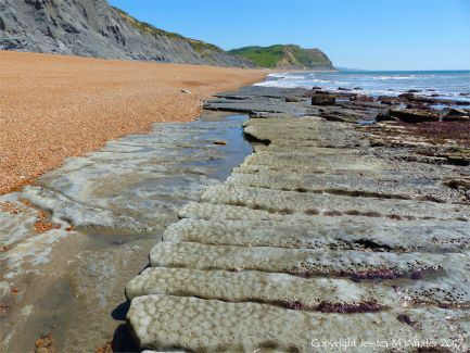 Coastal mudstone eroding into long fingers separated by narrow sinuous channels